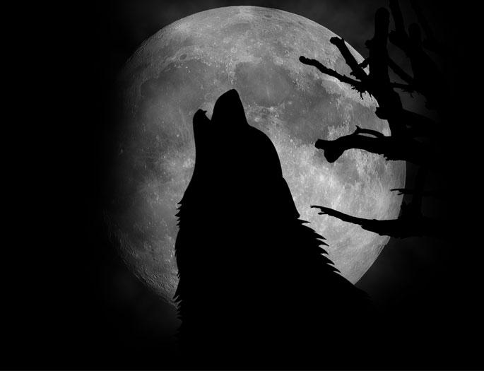 wolf-ibrahim